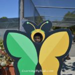Butterfly Farms | LearningByKids.com