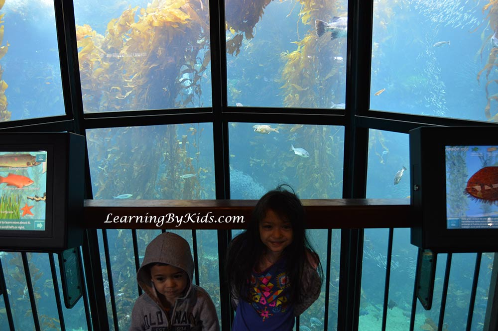 Monterey Bay Aquarium Kelp Forest Tank | Learning By Kids | LearningByKids.com