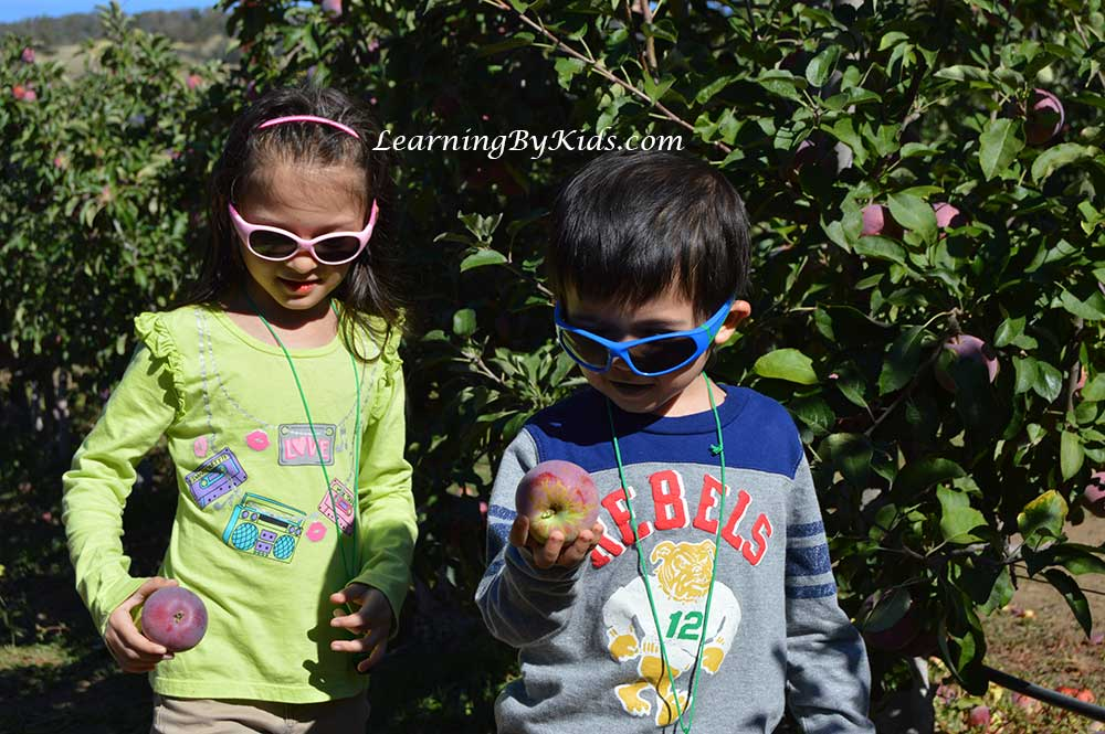 Julian Apple Festival Apple Picking | Learning By Kids | LearningByKids.com
