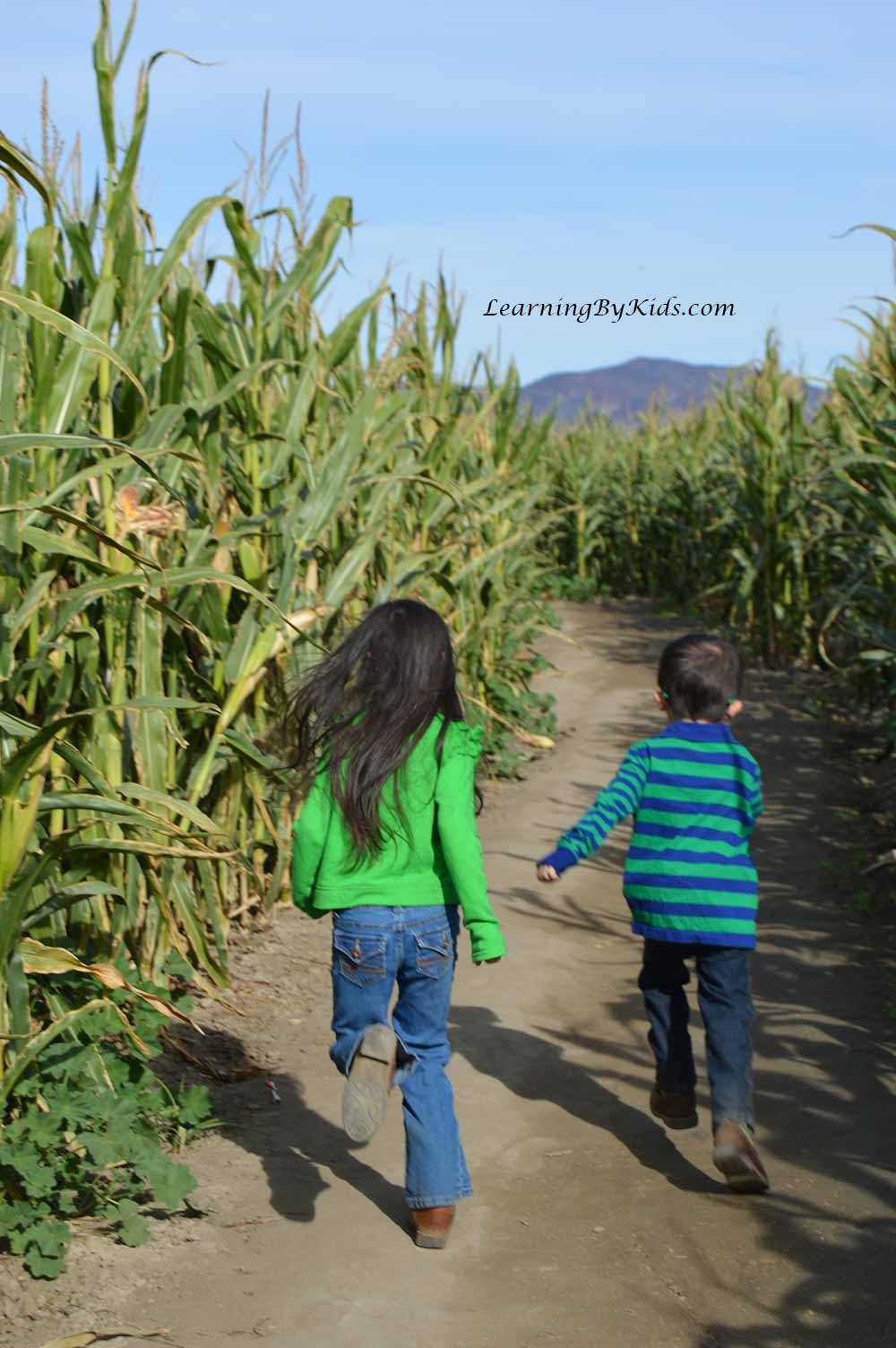 RunningInCornMaze---LearningByKids