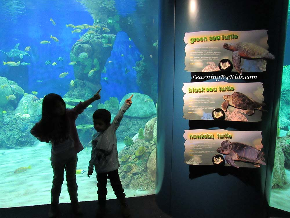SeaWorldSanDiegoTurtleReef---LearningByKids